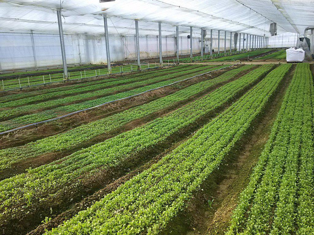 温室風景 野菜作り 宇陀ガーデン